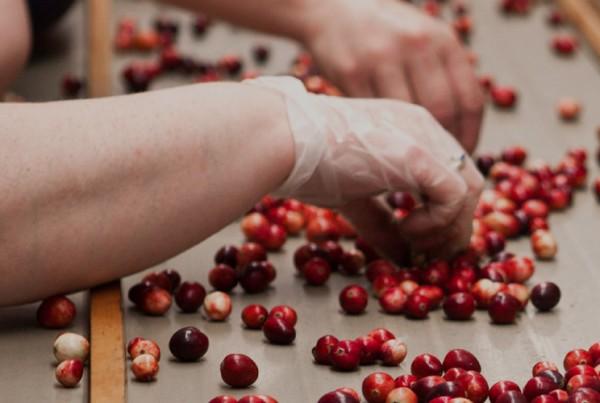 Gleam - Food & Beverage Processing